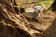 Gorgeous lamb