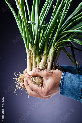 Long onions in hand