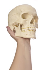 hand with scull