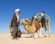 Chamelier dans le désert