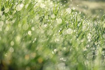 Tau, Gras und Licht