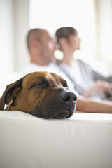Couple with dog sitting on sofa, side view