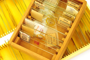 tissue samples on a slide in a box