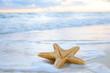 Leinwandbild Motiv sea star starfish on beach, blue sea and sunrise time, shallow d