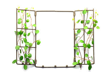 frame of the plant