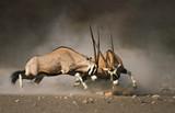 Fototapeta działanie - czynny - Dziki Ssak