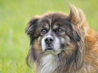 Retrato de perro mestizo.