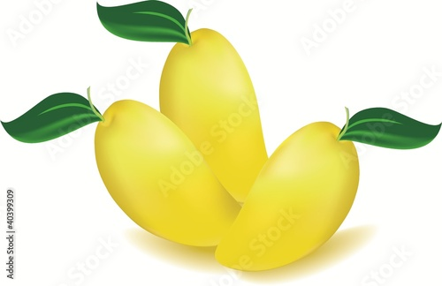 Vector of a mango fruit and leaf