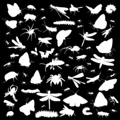 set of insects silhouettes isolated on black