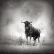 Blue Wildebeest in rainstorm