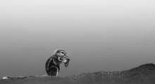 ecureuil de terre