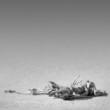 Eland skeleton in desert