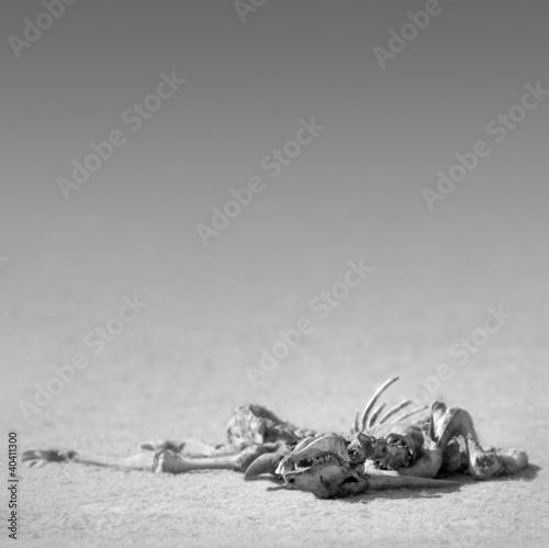 Eland skeleton in desert
