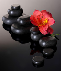Spa stones and red flower on grey background