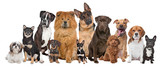 Group of twelve dogs - 40415982
