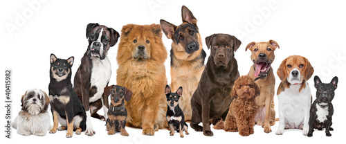 Keuken foto achterwand Franse bulldog Group of twelve dogs
