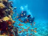 Fototapete Abenteuer - Tier - Wasser / Strand