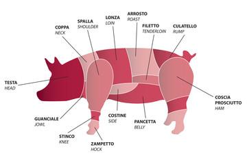 Vector pig parts