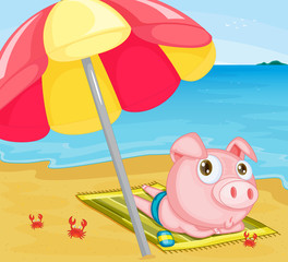 Pig at the beach