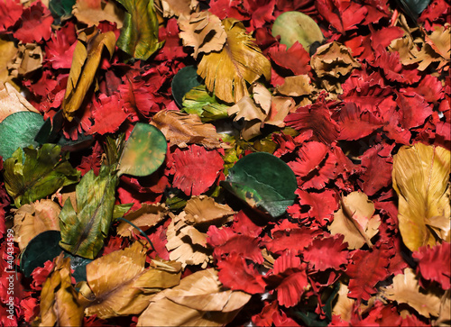 multi colored dry leaves