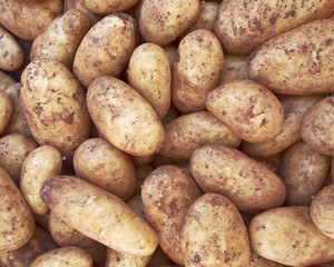 raw potatoes, food background