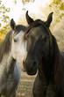 fall andhorses