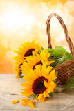 Fototapety sunflowers on wooden desk