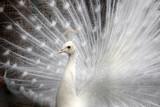 Fototapete Blau - Details - Vögel