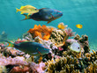 Leinwanddruck Bild - Colorful tropical fish and marine life in a coral reef, Caribbean sea