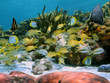 School of tropical fish in a coral reef