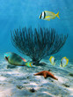 Sea fan and starfish