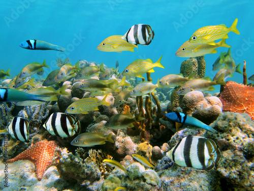 Papiers peints Recifs coralliens Corals and fish