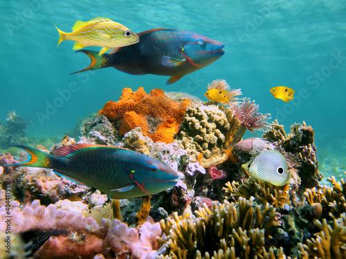 Leinwanddruck Bild Colorful tropical fish and marine life in a coral reef, Caribbean sea