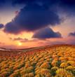 morning in meadow