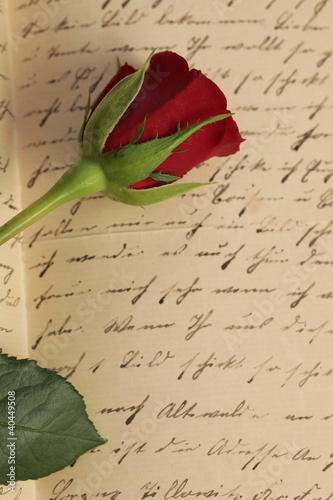 Rose mit antiker Schrift