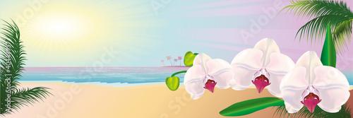 морской пейзаж орхидеи