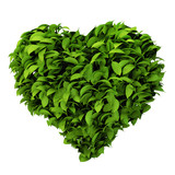heart symbol made of leafs