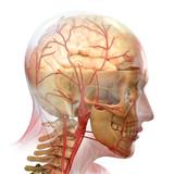 Fototapety anatomy