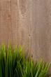Gräser vor einer Holzwand