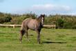 cavallo sul prato a Port isaac in Cornovaglia