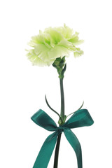 Green carnation and bow isolated on white background