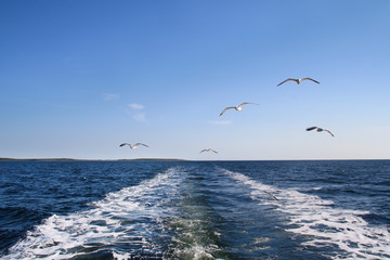 Seagulls flying in the air
