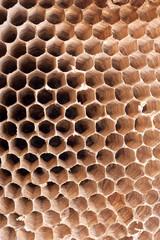 Detail of a empty hornet nest