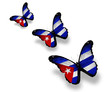 Three Cuban flag butterflies, isolated on white