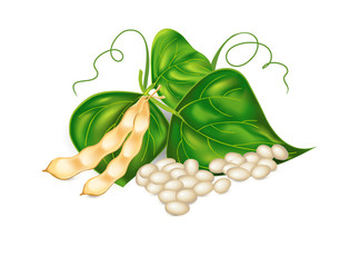 Kidney ( soy ) beans with leaves on white background