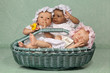 Three babies in basket