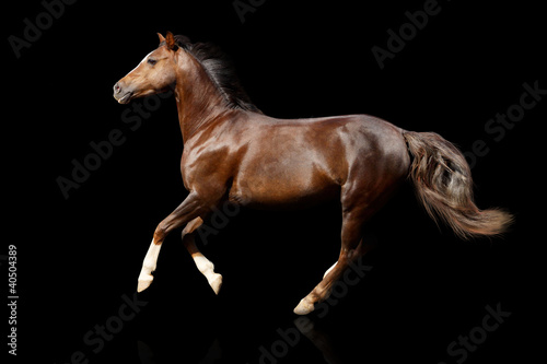 horse on black isolated