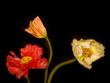 Blumenbukett
