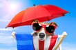 canvas print picture - dog sunbathing on a deck chair