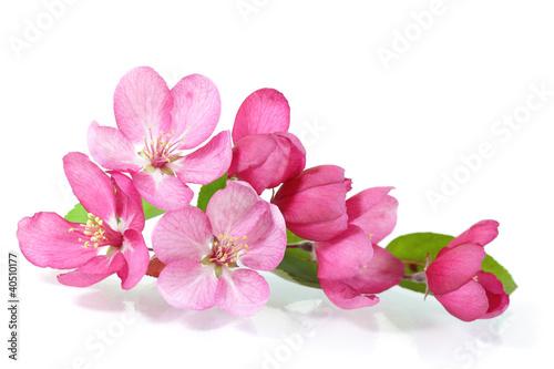 Fotobehang Kersen Red Cherry Blossom